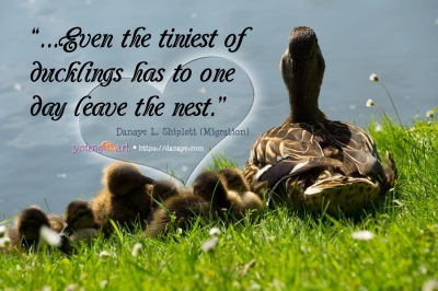 Even the tiniest of ducklings has to one day leave the nest. Quote from Migration essay by Danaye L Shiplett.
